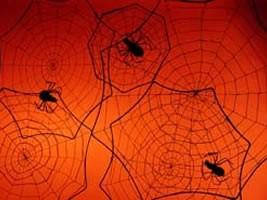 spider_webs_01
